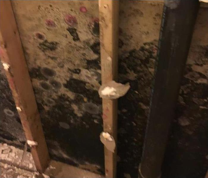 Hidden Mold in a Shrewsbury Property