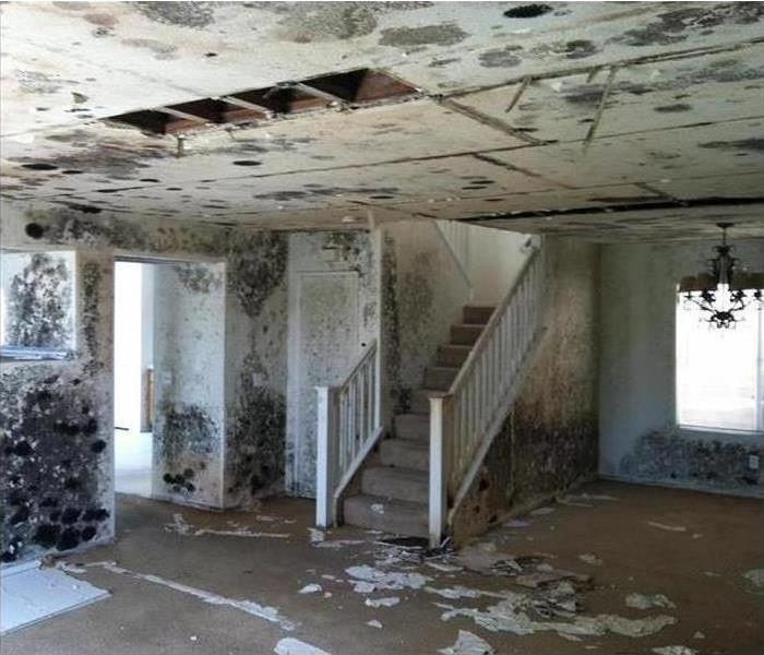 Mold Remediation SERVPRO Vs. Mold