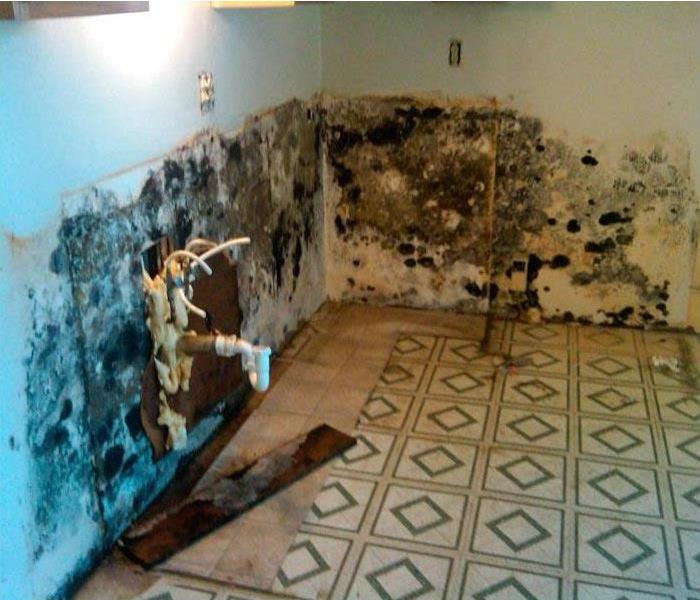 Commercial Commercial Mold Remediation from Local Apartment Building.